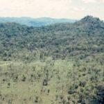ความสำคัญของป่าทุ่งใหญ่นเรศวร กับการก่อสร้างเขื่อนน้ำโจน