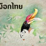 นกเงือกไทย 13 ชนิด