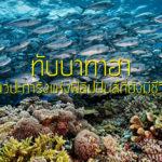 ทับบาทาฮา แนวปะการังแห่งฟิลิปปินส์ที่ยังมีชีวิต