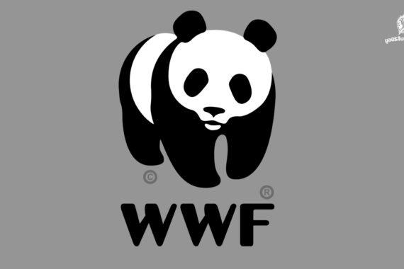 WWF-ประเทศไทย แถลงการณ์ประณามเปรมชัย กรณีล่าสัตว์ป่าในทุ่งใหญ่ฯ