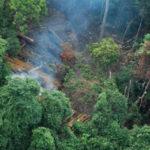 สหภาพยุโรป ผู้สมรู้ร่วมคิดในการทำลายป่ากัมพูชา ?