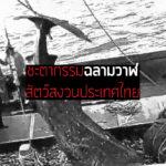 ชะตากรรม 'ฉลามวาฬ' อนาคตสัตว์สงวนประเทศไทย