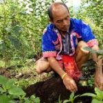 การเติบโตของกาแฟที่หมู่บ้านแม่กลองน้อย