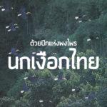 ด้วยปีกแห่งพงไพร นกเงือกไทย