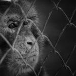 สัตว์ป่าไม่ใช่สัตว์เลี้ยง