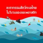ชะตากรรมสัตว์ทะเลไทยในวังวนของขยะพลาสติก