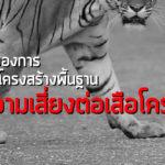 ยุคทองของการก่อสร้างโครงสร้างพื้นฐาน กับความเสี่ยงต่อเสือโคร่ง