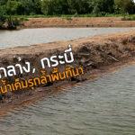 เกาะกลาง, กระบี่ วิกฤตน้ำเค็มรุกล้ำพื้นที่นา