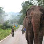 """ปัญหาความขัดแย้ง คน-ช้างป่า  กับโจทย์ """"การอยู่ร่วมกัน อย่างยั่งยืน"""""""