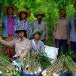 กรมอุทยานฯ ยืนยัน  พ.ร.บ.อุทยานแห่งชาติฉบับใหม่ เก็บหาของป่าได้แต่ต้องไม่ส่งผลกระทบป่า