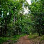 ชีวิตในป่าทุ่งใหญ่นเรศวรเป็นอย่างไร หลังคดีเสือดำผ่านมา 1 ปี