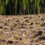 พื้นที่ปลอดภัยสำหรับสัตว์ป่าที่เหลืออยู่บนโลกใบนี้ อยู่ตรงไหน ?