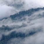 ฟื้นป่าทั่วโลกคือเครื่องมือสำคัญในการรับมือการเปลี่ยนแปลงสภาพภูมิอากาศ