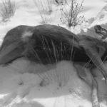 การให้อาหารสัตว์ป่าคือการ 'ฆ่าสัตว์ป่า'