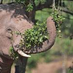 ช้างเลี้ยงไทยวันนี้เป็นอย่างไรบ้าง ? ชวนคุยกับ นสพ.ฉัตรโชติ ทิตาราม ถึงประเด็นที่ไทยถูกจัดอันดับให้เป็นประเทศที่มีการทรมานช้างติดอันดับ 2 ของเอเชีย