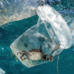 มลภาวะพลาสติกมีต้นทุน 2.5 ล้านล้านดอลลาร์สหรัฐต่อปี