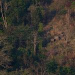 ความอุดมสมบูรณ์ของป่าทุ่งใหญ่ฯ เหตุผลที่บอกได้ว่า ทำไมถึงเกิดเหตุการณ์ครูสาวชาวไทยกะเหรี่ยงเผชิญหน้ากับเสือโคร่ง ?