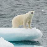 'โลกร้อน' ส่งผลกระทบอะไรต่อสัตว์ป่า ?