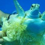 สัตว์ทะเลหายากเกยตื้น 3 ปีย้อนหลัง เฉลี่ยปีละ 400 ตัว เหตุจากขยะพลาสติกและติดเครื่องมือประมงสูงเป็นอันดับ 1