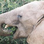 รู้หรือไม่ ช้างป่ามีบทบาทสำคัญต่อการลดคาร์บอนฯ ในชั้นบรรยากาศ
