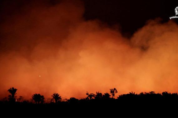 มีอะไรอยู่ในเปลวเพลิงที่กำลังแผดเผาผืนป่าแอมะซอน ปอดของพวกเราทุกคน