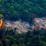 ใน 1 ปี พื้นที่ป่าทั่วโลกหายไปเทียบเท่าขนาดของประเทศอังกฤษ