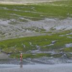 สาหร่ายมรณะ มลพิษแห่งหาดบริททานี ที่ 'ฆ่าคุณได้ในระดับวินาที'