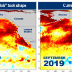 พบ คลื่นความร้อน ขนาดยักษ์ในมหาสมุทรแปซิฟิก หวั่นเกิดวิกฤติซ้ำรอย