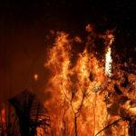 ไฟป่าแอมะซอน: เกิดอะไรขึ้นและเราทำอะไรได้บ้าง?