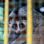 การค้าสัตว์ป่าทั่วโลก กำลังนำไปสู่การลดลงของสัตว์ป่าหลากหลายสายพันธุ์