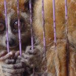 ประเทศเวียดนามได้เพิ่มหลักสูตรปัญหาการ ค้าสัตว์ป่า ไว้ในวิชาเรียน