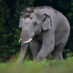 แผนแก้ปัญหาช้างป่าออกนอกพื้นที่ เขาอ่างฤๅไน กับแนวคิดการอยู่ร่วมกันอย่างยั่งยืนของ 'คนกับช้างป่า'
