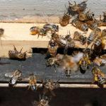 การล่มสลายของ แมลง อาจส่งผลกระทบต่อทุกชีวิตบนโลก