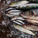 """ความแตกต่าง """"งู ๆ ปลา ๆ"""" ระหว่างที่ อุณหภูมิโลกเพิ่มขึ้น 1.5 องศาเซลเซียส กับ 3 องศาเซลเซียส"""
