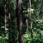 หากคุณสามารถรักษาผืนป่าให้กับโลกใบนี้ได้ คุณอยากทำอะไรบ้าง ? ชวนอ่านการทำงานเชิงรุกของ กรมป่าไม้ เพื่อดูแลป่า และเพิ่มพื้นที่ป่าไม้มีค่า
