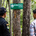 แนวคิด 'สามก้อนเส้า' กับการร่วม รักษาป่า แบบไตรภาคี