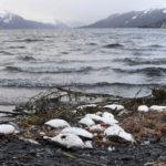 มวลคลื่นความร้อนในมหาสมุทรกับการตายของนกทะเลครั้งประวัติศาสตร์