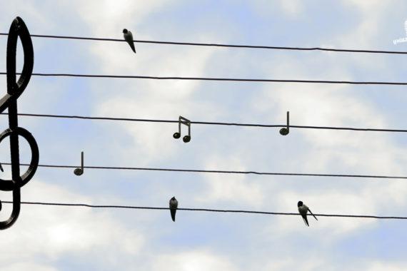 ทำความรู้จักกับ 'นก' ที่ปรากฎอยู่ในบทเพลงต่าง ๆ บนท้องถนนแห่งเสียงดนตรี