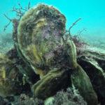แพลงก์ตอนอายุ 150 ปีกับการศึกษาผลกระทบจากภาวะมหาสมุทรเป็นกรด
