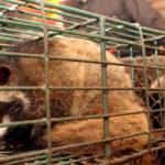 การแพร่ระบาดของโควิด-19 กับความหวังใหม่ของวงการอนุรักษ์สัตว์ป่า
