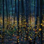 มลภาวะทางแสงคือมหันตภัยที่นำไปสู่การสูญพันธุ์ของแมลง