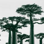 ต้นไม้จะสูญพันธุ์มากกว่าอัตราปกติถึง 350 เท่า งานวิจัยชี้เหตุหลักคือการเกษตรและการขยายของเมือง
