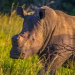 ความยากของงานอนุรักษ์สัตว์ใกล้สูญพันธุ์ ท่ามกลางการระบาดของ COVID-19