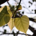 ต้นไม้เป็นมิตรกับคน : คำสอนของพระพุทธเจ้ากับแนวคิดการอนุรักษ์ ที่สืบทอดมากว่า 2,600 ปี