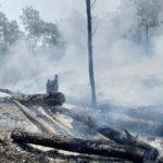 หลังไฟเหนือมอดดับ : กับวิธีการฟื้นฟูผืนป่าที่ไม่ได้ทำแค่ 'ปลูกต้นไม้'