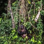 การตัดไม้ทำลายป่าทำให้ไวรัสแพร่จากสัตว์สู่มนุษย์ง่ายขึ้น