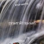 WILD-WRITE : ธรรมชาติร่ายมนตร์