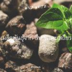 WILD-WRITE : เมล็ดพันธุ์จาก สืบ นาคะเสถียร