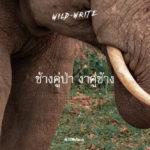 WILD-WRITE : ช้างคู่ป่า งาคู่ช้าง