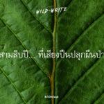 WILD-WRITE : สามสิบปี… ที่เสียงปืนปลุกผืนป่า